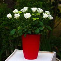 Gorgeous Flowers of May at 12% OFF with Bank of Commerce!